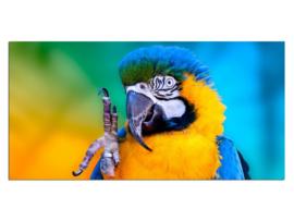 39 Papagaai Glas Schilderij