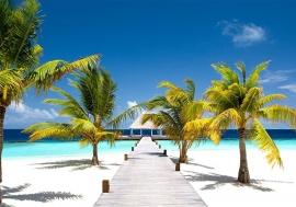 Palmboom Blauwe Zee nr40