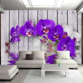 Hout Paars Orchidee nr 525
