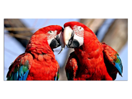18 Papagaai Glas Schilderij