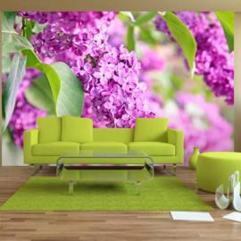 Roze Bloemen nr 351