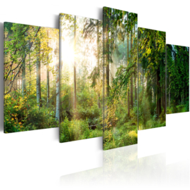 560 Natuur Bomen Bos