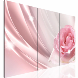 nr 40 Roze Roos