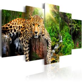 277 Luipaard Natuur