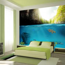 Vissen Water Aquarium Natuur nr 445