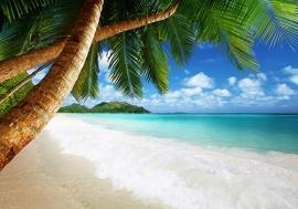 Paradijs Palmboom nr68