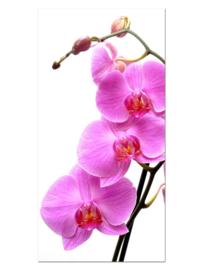 118 Roze Orchidee Glas Schilderij