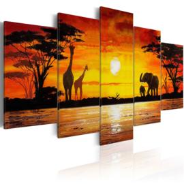 703 Afrika Olifant Giraffe