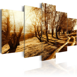 nr57 Natuur Bomen Pad