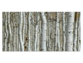 27 Berken Bomen Glas Schilderij