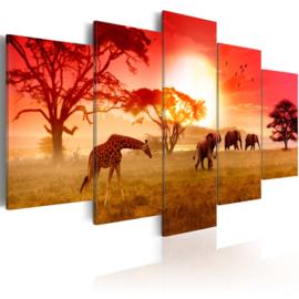 220 Afrika Olifant Giraffe