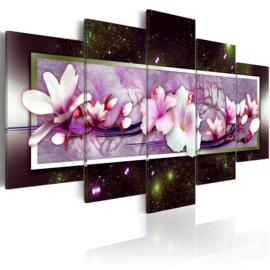 nr9 Magnolia Bloemen