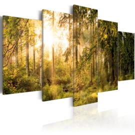 561 Bomen Bos Natuur