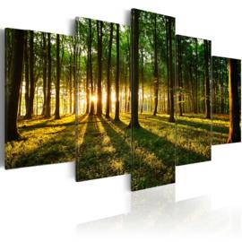 143 Bos Natuur Bomen Zonlicht