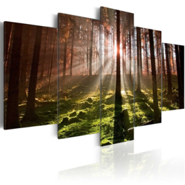 328 Natuur Bos Bomen