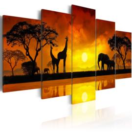 528 Afrika Giraffe Olifant