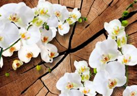 Boom Orchidee nr 137