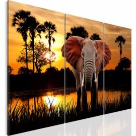nr 31 Afrika Olifant