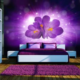 Paars Orchidee nr 413