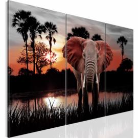nr 32 Afrika Olifant