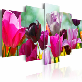 969 Tulpen Colors