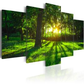 920 Natuur Bomen Bos