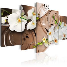 137 Modern Orchidee