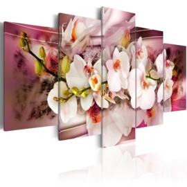154 Modern Roze Wit Orchidee