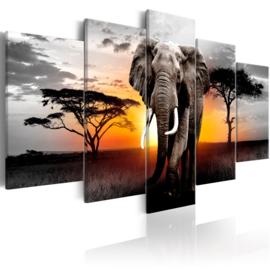 787 Afrika Olifant