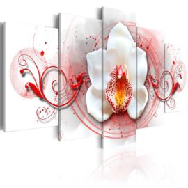 309 Orchidee Rood