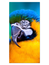 137 Papagaai Glas Schilderij