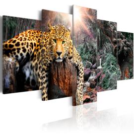279 Luipaard Natuur