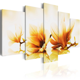 349 Geel Magnolia Bloemen