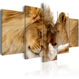 384 Leeuw