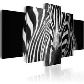 619 Zwart Wit Zebra