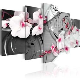 139 Modern Orchidee Wit Roze