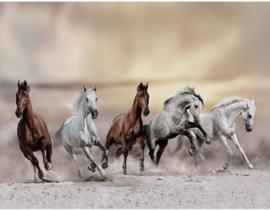 Witte en Bruine Paarden nr 181