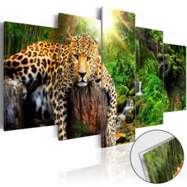 12 Luipaard Natuur Acrylglas Schilderij