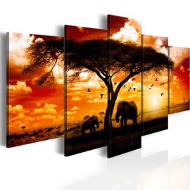 912 Afrika Olifant