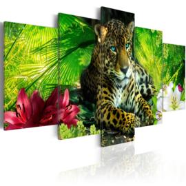 479 Luipaard Natuur