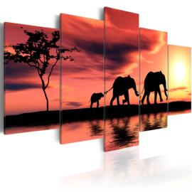 816 Afrika Olifant