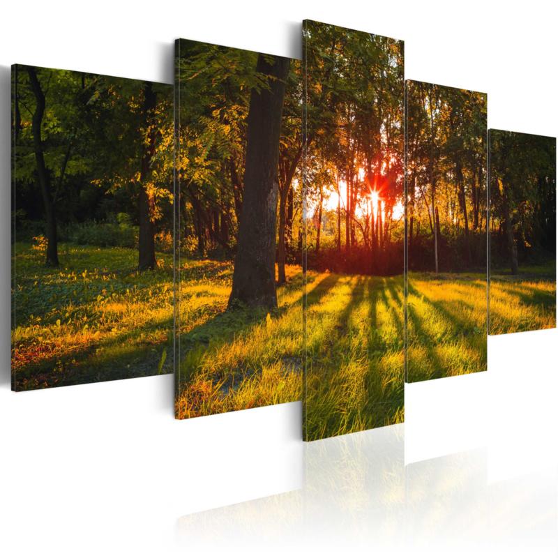 922 Natuur Bos Bomen