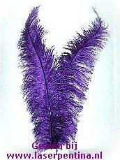 Spadonis Veer paars