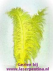 Spadonis Veer geel