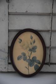 Frans rozen schilderij