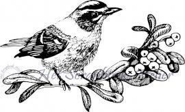 HP Stempel 58b Vogeltje op tak