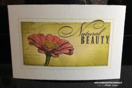 HP Stempel 19a1 Natural Beauty