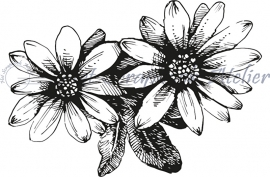 HP Stempel 55i Corner met 2 bloemen