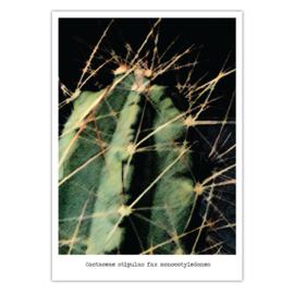 Cactus #4