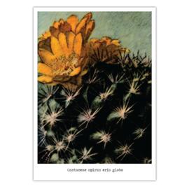Cactus #5